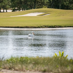Swan on water hazard